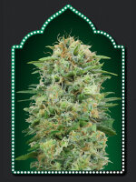 00 Seed Bank - White Widow CBD Feminised Cannabis Seeds