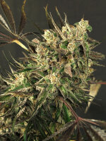 Exotic Seeds - Exotic Colours Feminised Cannabis Seeds