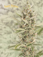 Super Strains - 7th Wave - Feminised Cannabis Seeds