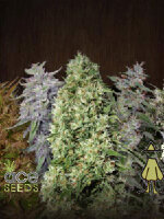 Ace Seeds - Ace Mix Regular Cannabis Seeds