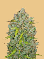 Fast Buds Seeds Original Line - Auto Bubblegum Autoflowering Feminised Cannabis Seeds
