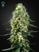 Green House Seeds - Super Silver Haze CBD Feminised Cannabis Seeds