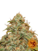 Barneys Farm - CBD Lemon Potion Auto Feminised Autoflowering Cannabis Seeds