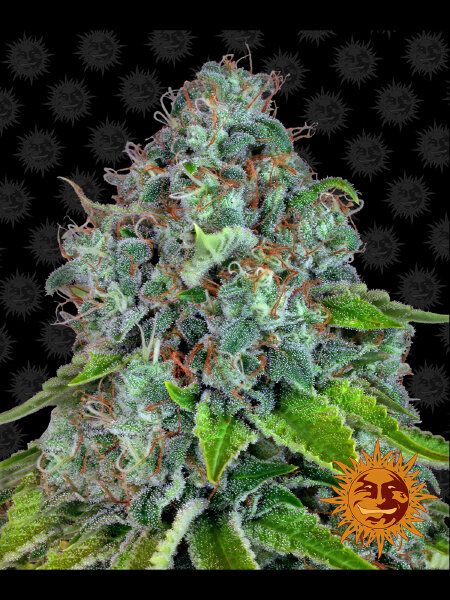 Barneys Farm - Strawberry Lemonade Feminised Cannabis Seeds