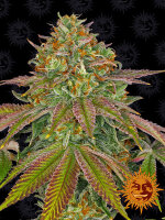 Barneys Farm - Wedding Cake Feminised Cannabis Seeds