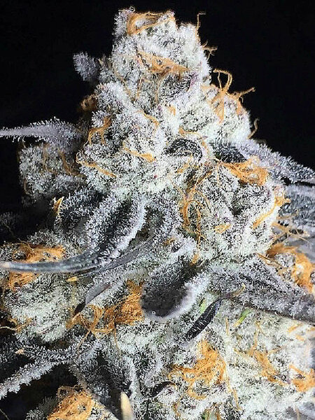 Big Head Seeds - Crystal Gelato Feminised Cannabis Seeds