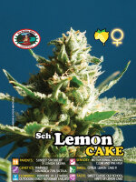 Big Buddha - Sch'lemon Cake Feminised Cannabis Seeds