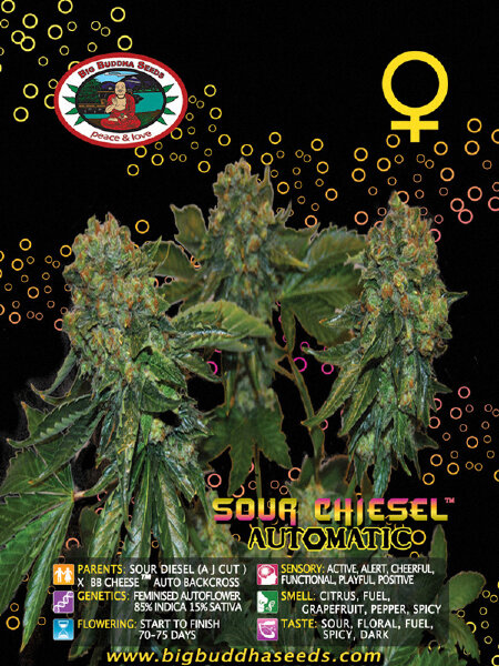 Big Buddha Seeds - Sour Chiesel Automatic Feminised Autoflowering Cannabis Seeds