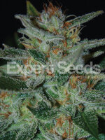 Expert Seeds - Blue Funk Feminised Cannabis Seeds