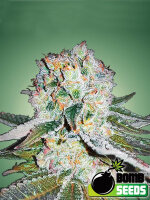 Bomb Seeds - Banana Bomb Feminised Cannabis Seeds