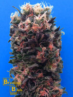 Breaking Buds Seeds - Blue Sky 99% Feminised Cannabis Seeds