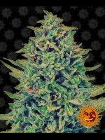 Barneys Farm - CBD Blue Shark Feminised Cannabis Seeds