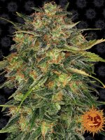 Barney's Farm - Cheese Feminised Cannabis Seeds