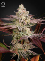 Green House Seeds - Chemical Bride Feminised Cannabis Seeds