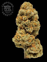 Compound Genetics - Orange Apricot BX1 Regular Cannabis Seeds