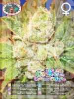 Big Buddha Seeds - Cookies & Cream Cheese Feminised Cannabis Seeds