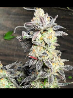 Dank Genetics - Key Lime Sauce Feminised Cannabis Seeds