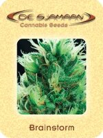 De Sjamaan - Brainstorm 5 Regular Cannabis Seeds