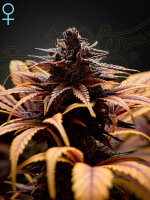 Green House Seeds - Deep Candy (CBD)  Feminised Cannabis Seeds