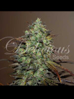 Delicious Seeds - Eleven Roses Feminised Cannabis Seeds