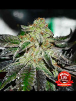 Delicious Seeds - Original Juan Herer Regular Cannabis Seeds