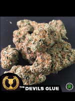 Devil's Harvest - Devil's Glue Feminised Cannabis Seeds