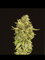 Devil's Harvest - Hell's Bells Feminised Cannabis Seeds