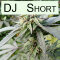 DJ Short Seed Bank