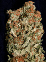 Don Avalanche Seeds - Don Amnesia Feminised Cannabis Seeds