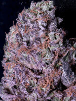 Don Avalanche Seeds - Don Gelato Feminised Cannabis Seeds
