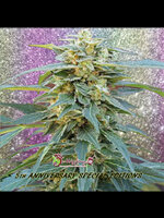 Dr Krippling Seeds - D.K. Won Feminised Cannabis Seeds