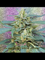 Dr Krippling Seeds - Jammy Auto Feminised Autoflowering Cannabis Seeds