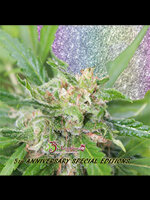Dr Krippling Seeds - Kripplicious Feminised Cannabis Seeds