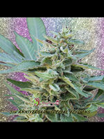 Dr Krippling Seeds - S&M Feminised Cannabis Seeds