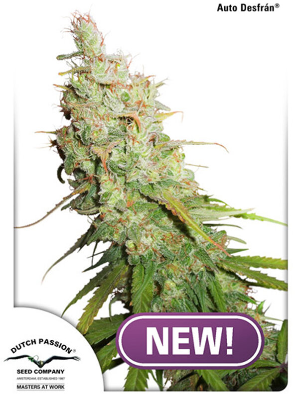 Dutch Passion - Auto Desfran Feminised Autoflowering Cannabis Seeds