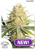 Dutch Passion - Lemon Zkittle Feminised Cannabis Seeds