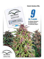 Dutch Passion - Dutch Outdoor Mix Feminised Cannabis Seeds