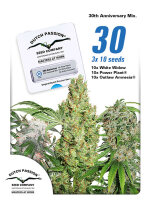 Dutch Passion - 30th Anniversary Mix Feminised Cannabis Seeds 30 Pack