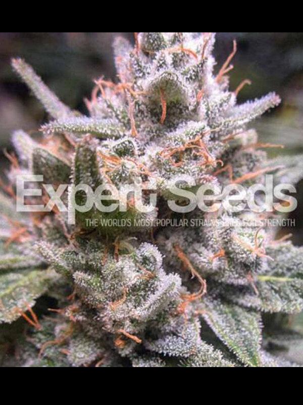 Expert Seeds - Gorilla Glue #4 Auto Feminised Autoflowering
