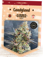Garden of Green - Candyland Feminised Cannabis Seeds