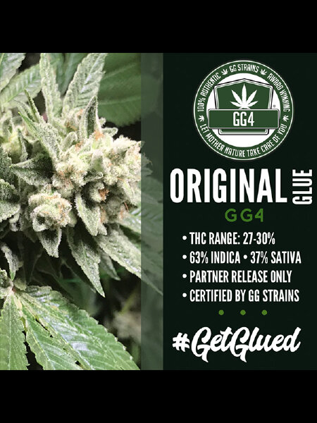 GG Strains - Original Glue GG4 Feminised Cannabis Seeds