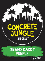 Concrete Jungle - Grand Daddy Purple - Feminised Cannabis Seeds