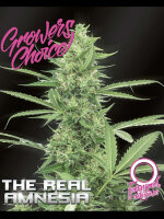 Growers Choice - Amnesia (The Real) Auto Feminised Autoflowering Cannabis Seeds