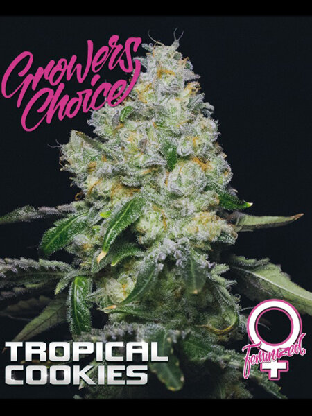 Growers Choice - Tropical Cookies Feminised Cannabis Seeds