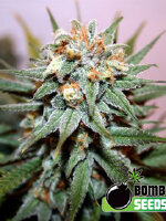 Bomb Seeds - Hash Bomb Feminised Cannabis Seeds