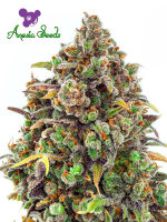 Anesia Seeds - Haze Queen Feminised Cannabis Seeds