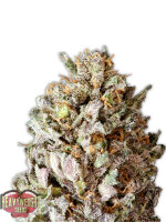 Heavyweight Seeds - Diesel Drift Feminised Cannabis Seeds