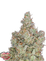 Heavyweight Seeds - Total Paralysis Feminised Cannabis Seeds