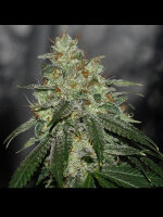 Karma Genetics - Di Fruity LTD Regular Cannabis Seeds
