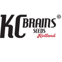 KC Brains Seeds
